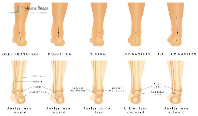 Diagram of pronation